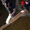 Alanya'da Kedi Kurtarma Operasyonu