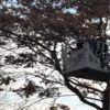 Ağaçtaki İpe Takılan Güvencin Böyle Kurtarıldı