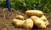 Gürcistan, Türkiye'den Patates Alımını Durdurdu