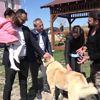 Sivas Abbas Güçlü'nün Kangal Sevgisi-Hd