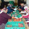 Matso Başkanı Ahmet Boztaş Manavgat Meyvecilikte de Adından Söz Ettirecek