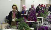Antalya-Anneler Günü İçin 35 Ülkeye 42 Milyon Dal Kesme Çiçek-Hd