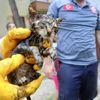 Boruya Sıkışan Yavru Kediyi İtfaiye Kurtardı