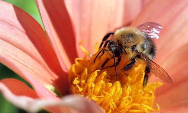 Arılar Islah Edilecek