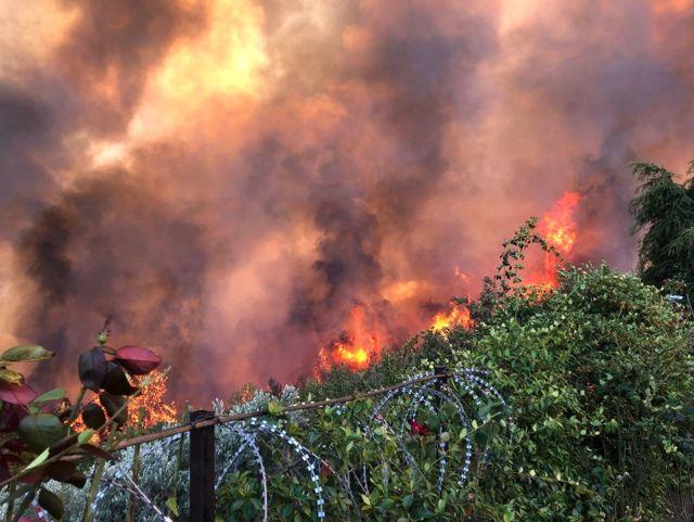 Orman Yangını ile İlgili Soruşturma Başlattı