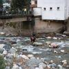 Rize'de Kurbanlık Boğa Dereye Düştü