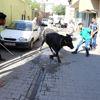 Şanlıurfa'da Kaçan Kurbanlık İğneyle Sakinleştirilerek Yakalandı