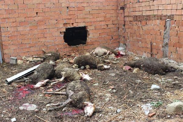 Gelibolu'da Çiftlikteki Yangında 45 Koyun Telef Oldu