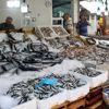 Karadeniz'de Tezgahlar Balık Çeşitleriyle Şenlendi