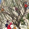 Okul Bahçesindeki Ağaçlara Kuş Yuvası Yerleştirdiler