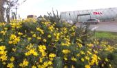 Antalya Demre'de Çiçekler Açtı
