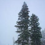 Giresun Yaylalarında Kar Güzelliği