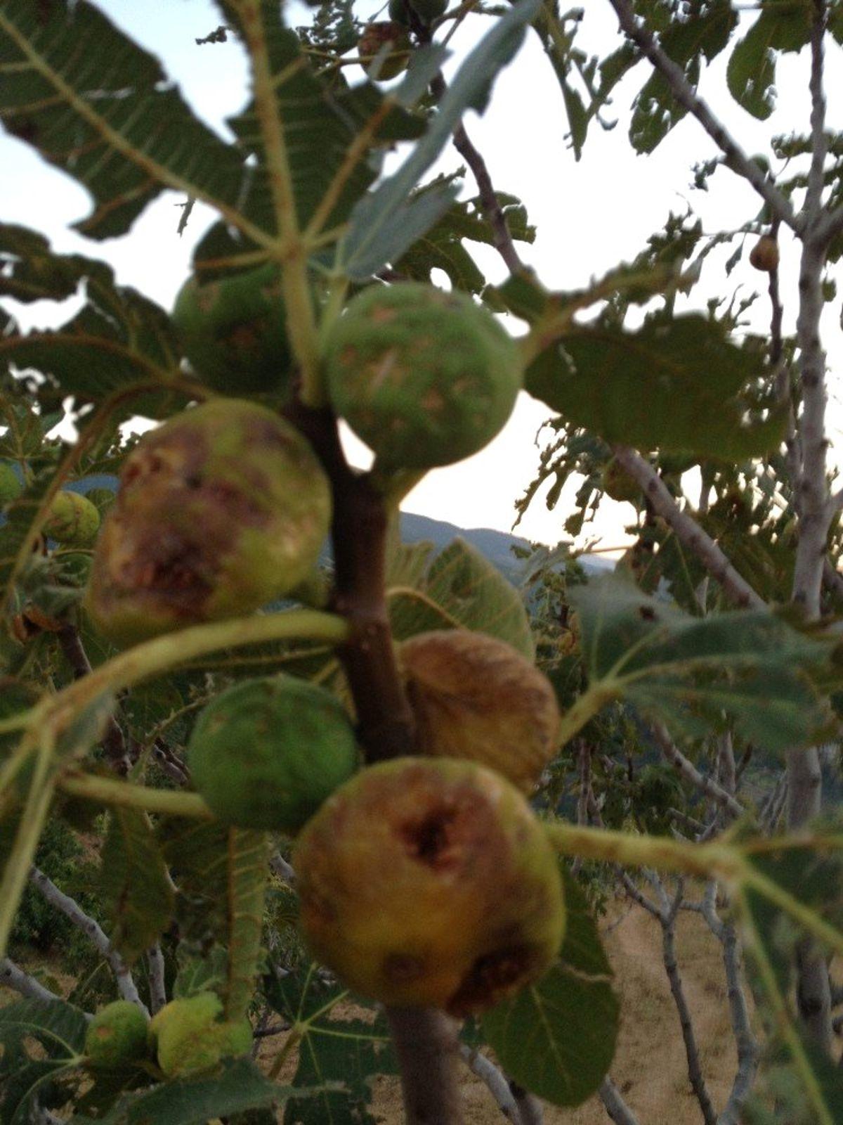 Sert Sigorta'dan Çiftçilere 'Tarsim' Uyarısı