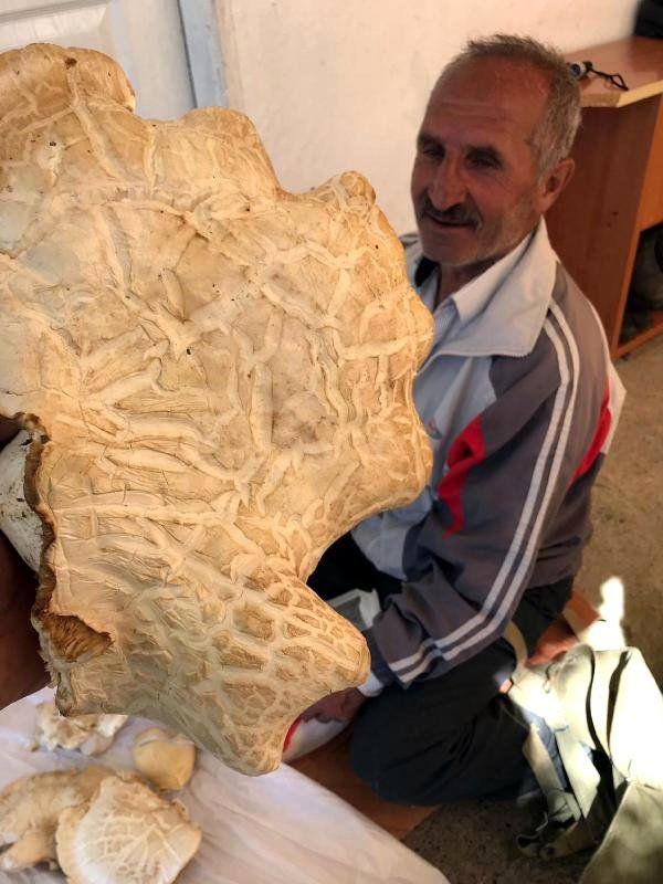Erzincan'da 7 Kilo 300 Gram Ağırlığında Dev Mantar Bulundu