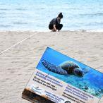 İztuzu Plajı'ndaki Yuva Sayısı 28'e Ulaştı