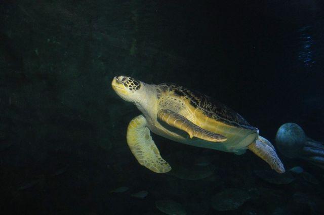 Dünya Deniz Kaplumbağaları Günü'nde anlamlı çağrı