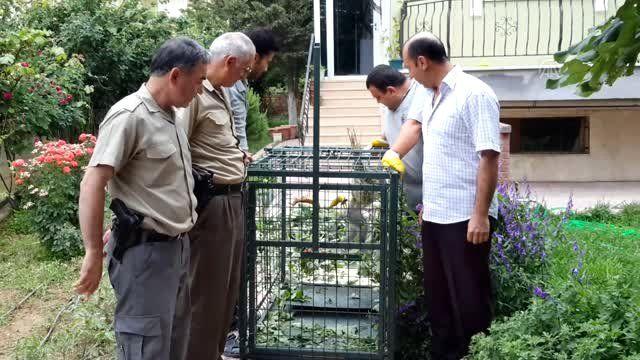 Konya'da bulunan maymun koruma altına alındı