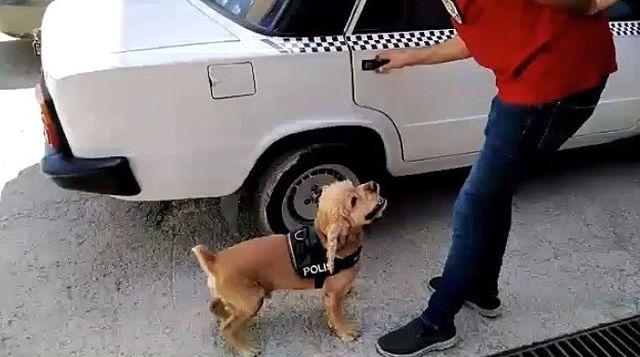 Narkotik köpeği önce buldu, sonra poz verdi