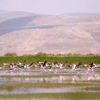 Akgöl Sazlığı binlerce kuşa ev sahipliği yapıyor