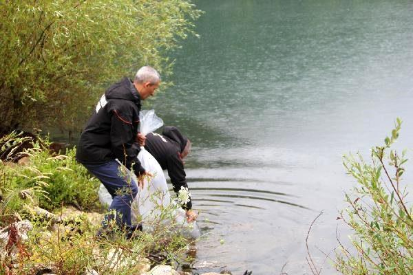 Yalova'da, göletlere 35 bin yavru sazan
