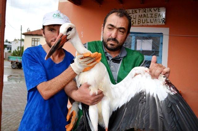 Yuvasından düşen leylek Bünyan Belediyesi'ne emanet