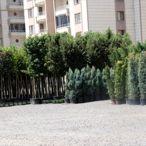 Bağlar Belediyesinden kent merkezinde organik tarım projesi