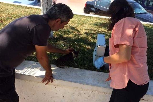 Yaralı kedi hayata döndürüldü
