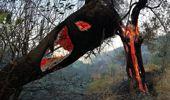 İzmir'deki yangın 48 saat sonra kontrol altında! İşte yürek sızlatan görüntüler