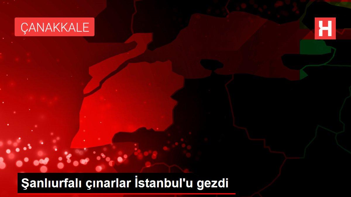 Şanlıurfalı çınarlar İstanbul'u gezdi