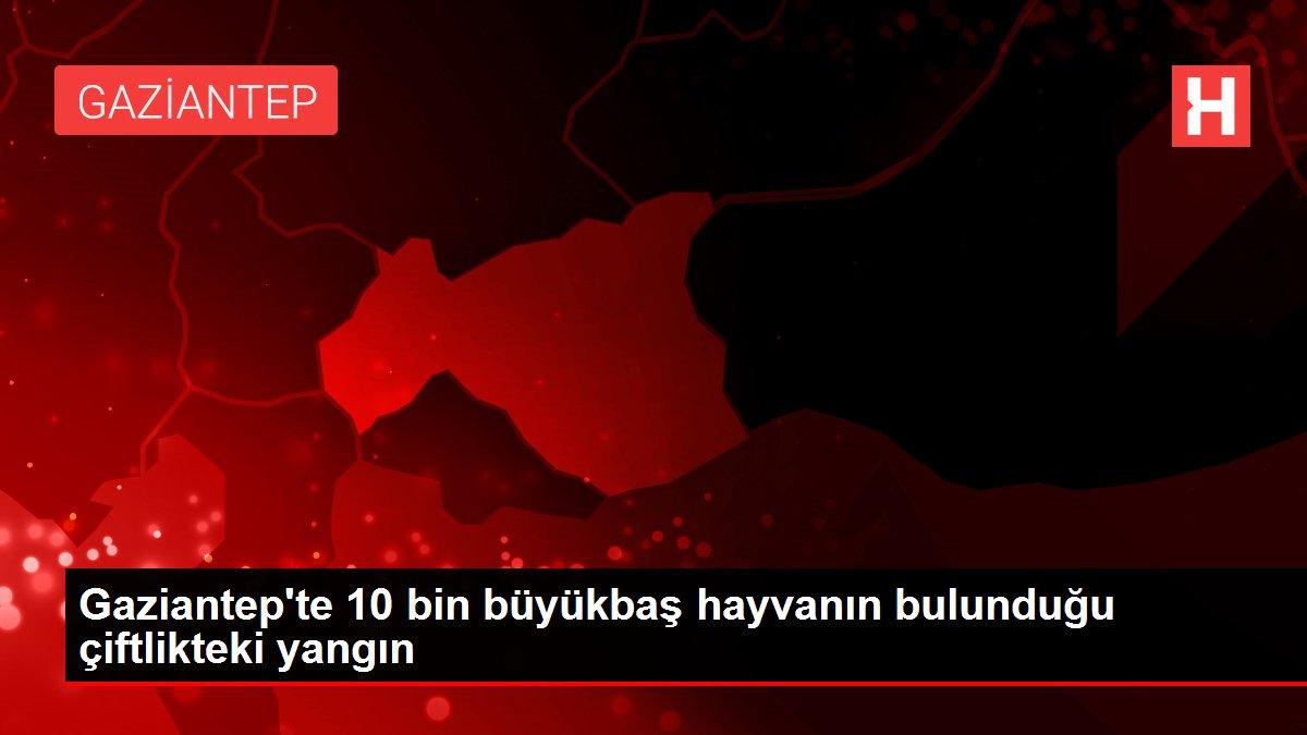Gaziantep'te 10 bin büyükbaş hayvanın bulunduğu çiftlikteki yangın