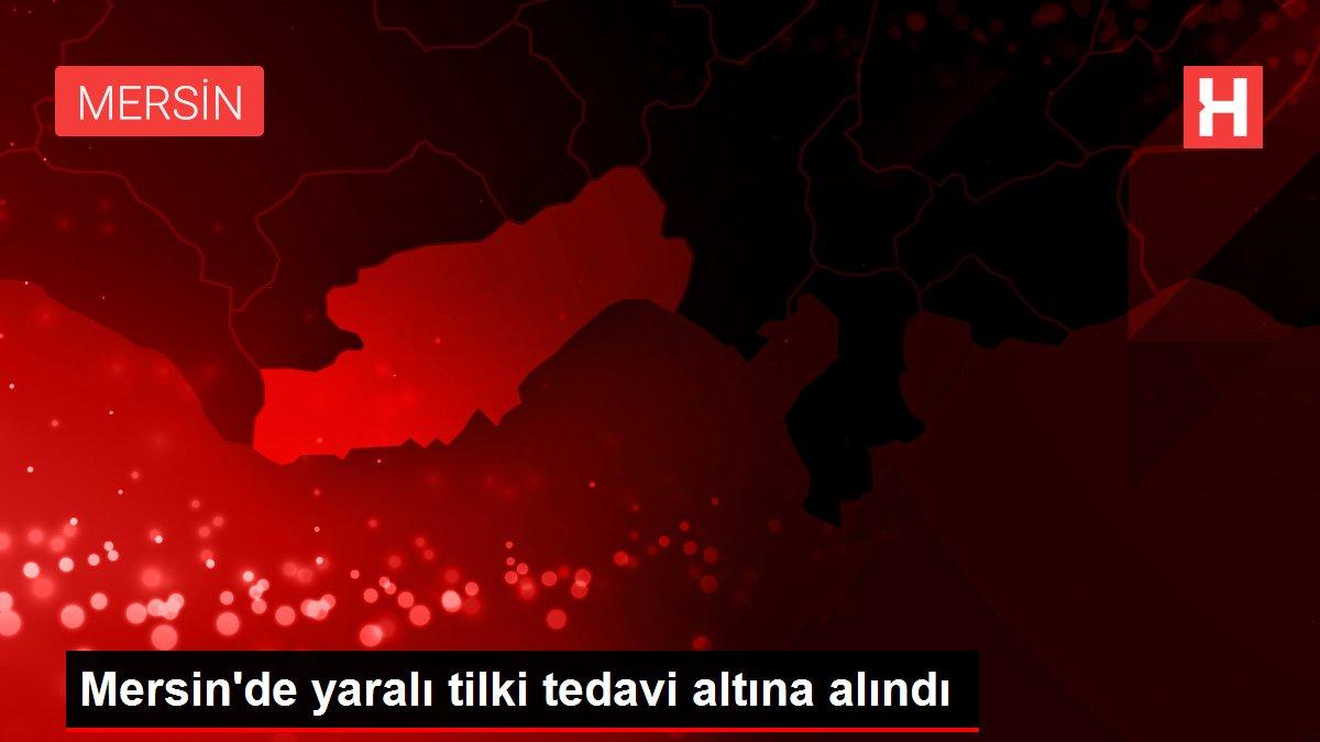 Mersin'de yaralı tilki tedavi altına alındı