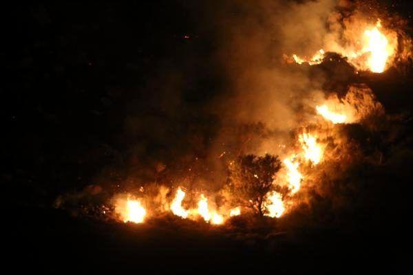 Bodrum'da makilik alandaki yangın kontrol altında/ fotoğraflar