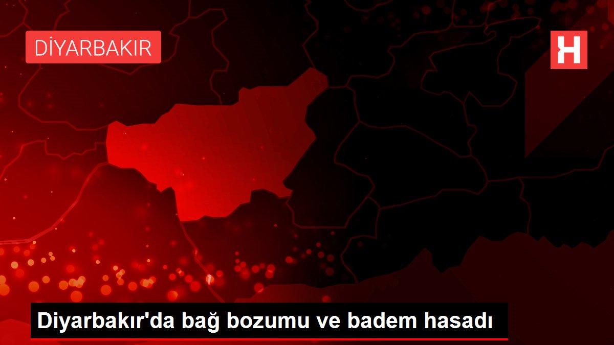Diyarbakır'da bağ bozumu ve badem hasadı
