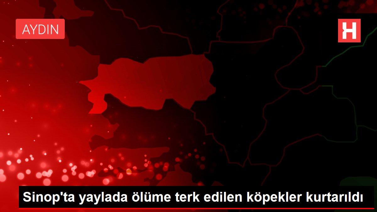 Sinop'ta yaylada ölüme terk edilen köpekler kurtarıldı