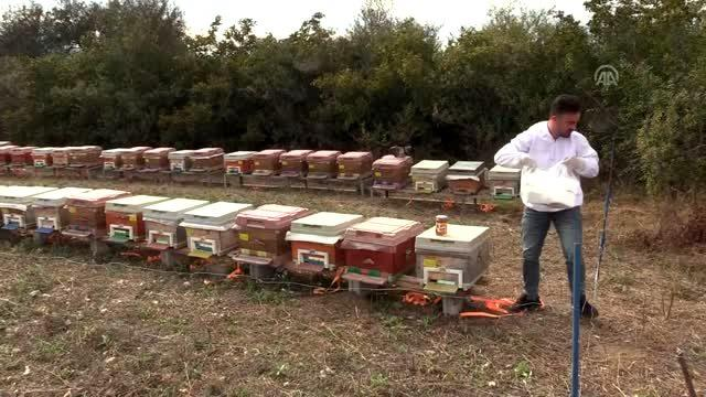 Genç Çiftçi Projesi memleketinde kalmasını sağladı - KASTAMONU
