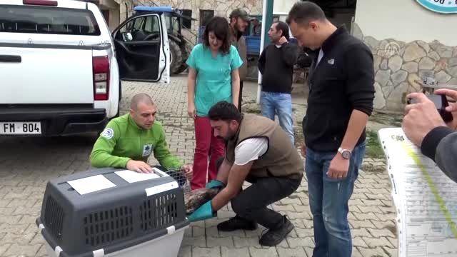 Tedavisi tamamlanan yaralı akbaba ülkesine teslim edildi