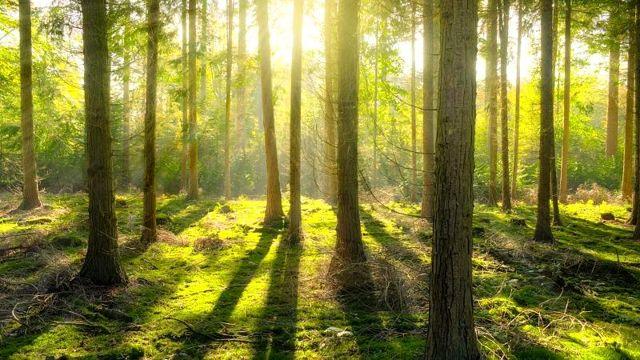 Araştırma: Toplu ağaçlandırma iklim krizi ile mücadelede yeterli değil