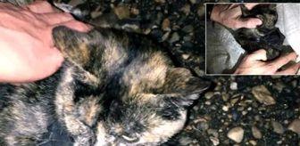 Uyuşturucu kuryesi olarak kullanılan kedi gözaltına alındı