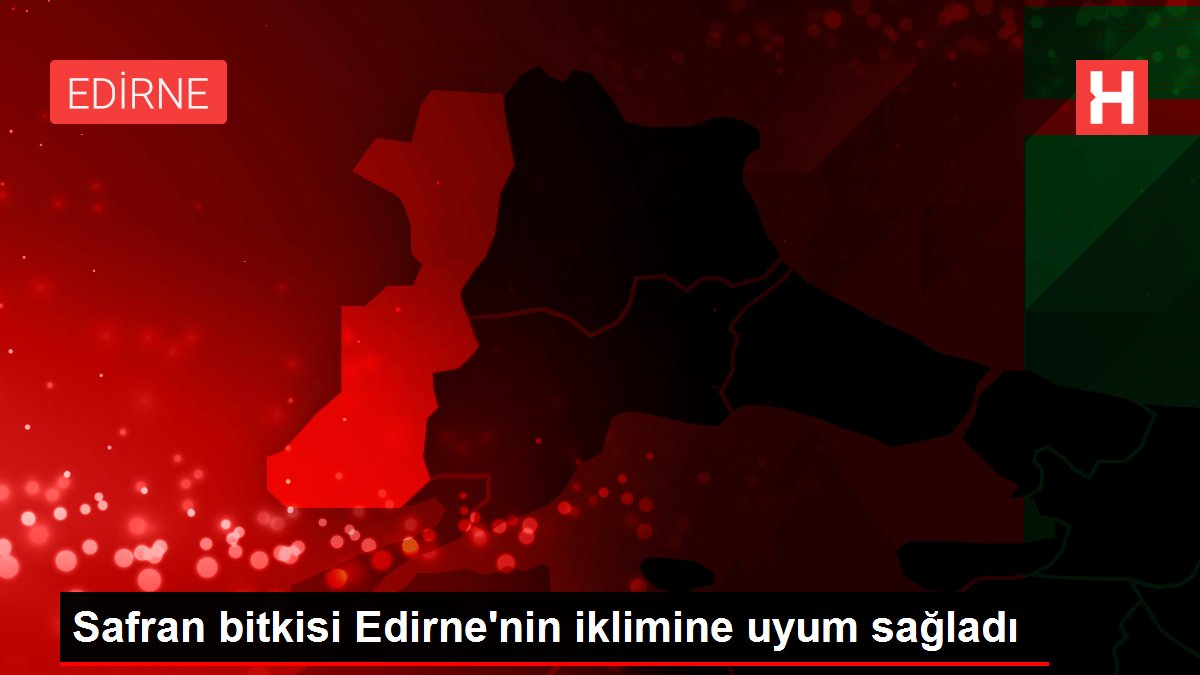 Safran bitkisi Edirne'nin iklimine uyum sağladı