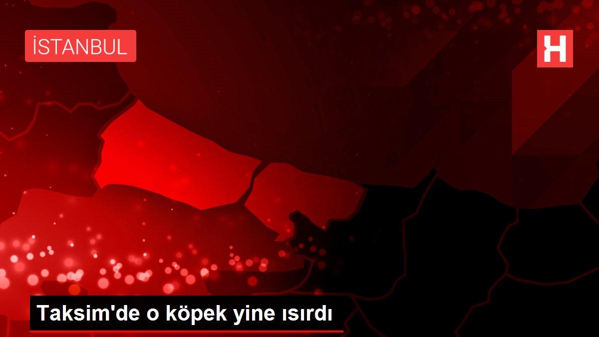 Taksim'de o köpek yine ısırdı
