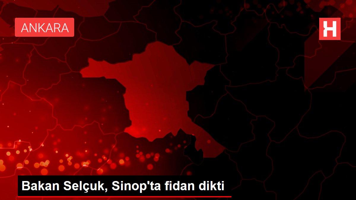 Bakan Selçuk, Sinop'ta fidan dikti