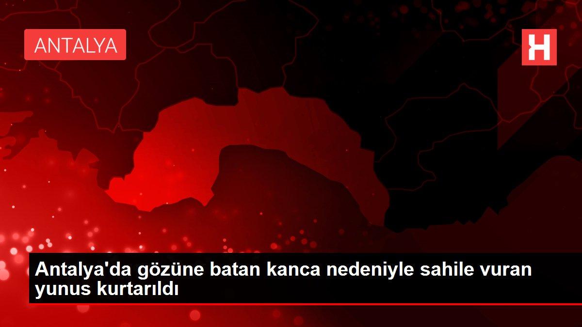 Antalya'da gözüne batan kanca nedeniyle sahile vuran yunus kurtarıldı