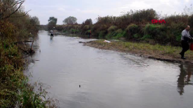 Manisa gediz nehri'nde toplu balık ölümleri