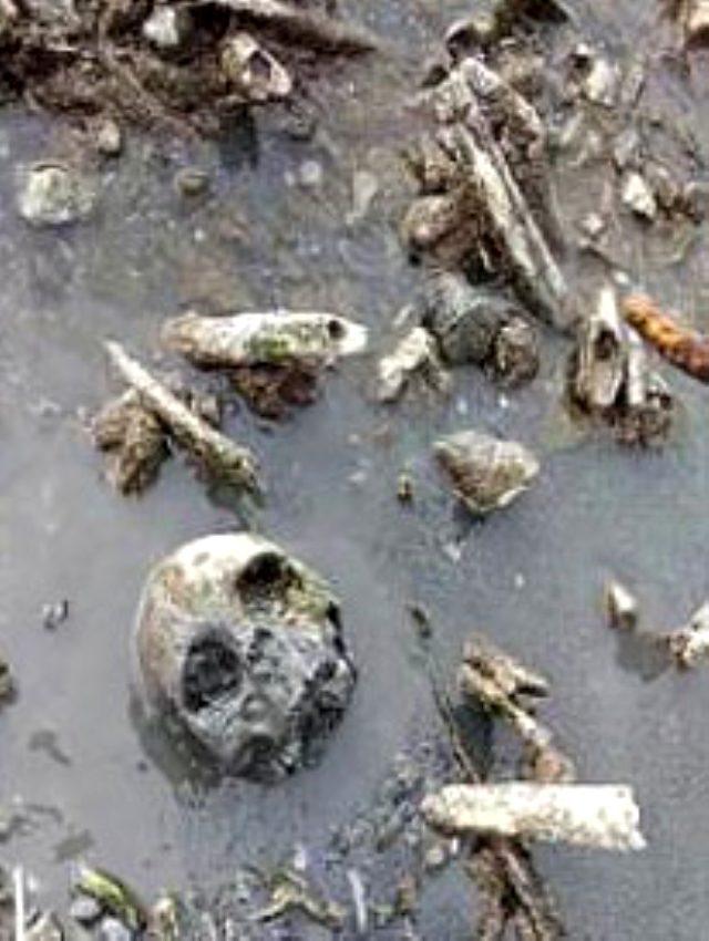 van gölü kafatası ile ilgili görsel sonucu