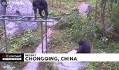 Buz hokeyi sahasındaki oyuncak ayılardan çamaşır yıkayan maymuna haftanın öne çıkan 'No Comment'leri