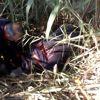 Mersin'de sulama kanalına düşen ineği itfaiye kurtardı