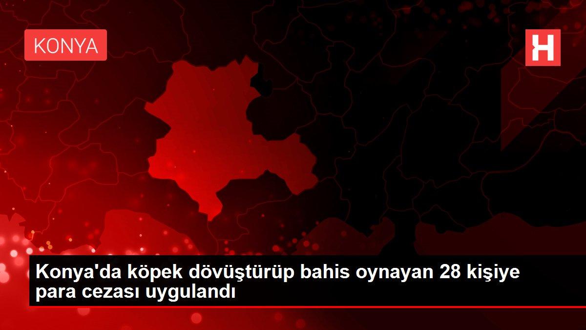 Konya'da köpek dövüştürüp bahis oynayan 28 kişiye para cezası uygulandı