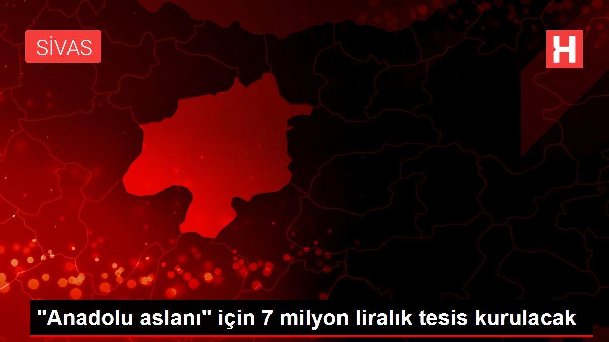 Anadolu aslanı için 7 milyon liralık tesis kurulacak