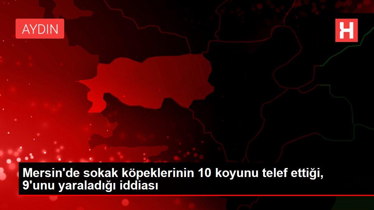 Mersin'de sokak köpeklerinin 10 koyunu telef ettiği, 9'unu yaraladığı iddiası