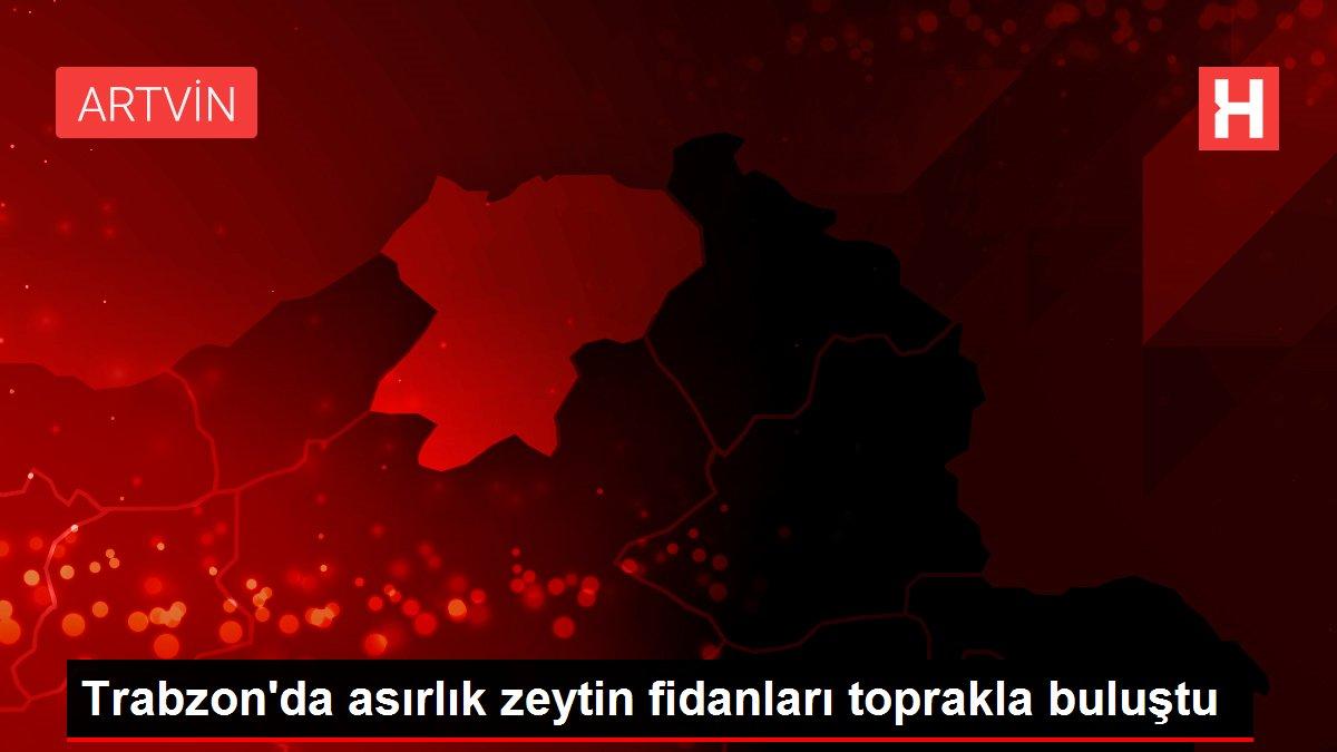 Trabzon'da asırlık zeytin fidanları toprakla buluştu